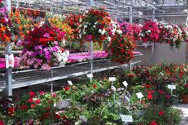 Types Of Planting Flowers - robson u0027s greenhouse what u0027s in season hanging baskets