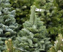 christmas tree sales black friday artificial christmas trees on sale for black friday best images
