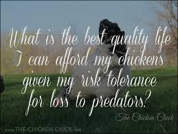 the chicken chickens predators u0026 the myth of supervised