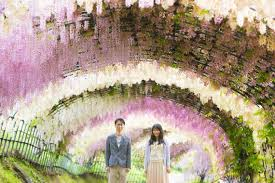 japan flower tunnel 4 seasons of blossoms in japan for your pre wedding photos famarry