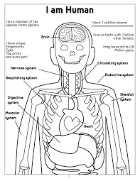 endocrine system coloring pages murderthestout