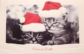 pumpernickel christmas cards cat christmas cards 822 br embossed by pumpernickel press