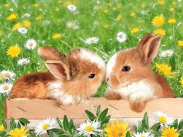 50 bunnies that are much cuter than the easter bunny 2