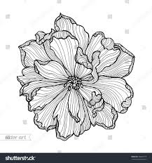 tulip flower top view line pattern stock vector 386405779