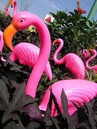 23 best flamingos images on plastic flamingos