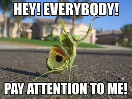 Pay Attention To Me Meme - pay attention to me image macros