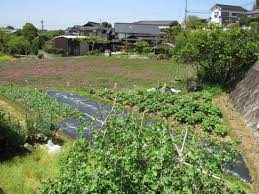 at home in rural japan pt 3 the wonder of japanese vegetable