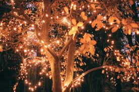 uninterrupted lighted trees lights and autumn