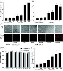 microrna expression signature and antisense mediated depletion