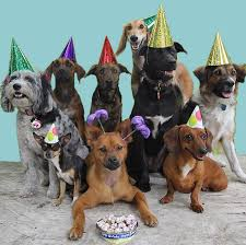 dog birthday party celebrate your dog s birthday with a party at k 9 to five