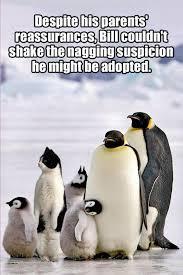 Funny Penguin Memes - penguin cat cats know your meme