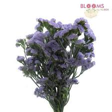 statice flowers wholesale filler flowers bloomsbythebox