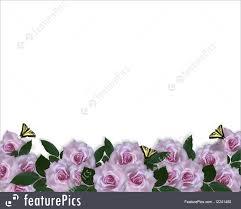 lavender roses lavender roses border illustration