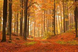 most amazing places in the us top 5 most beautiful places to visit in the us in the fall vix