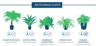best plants for air quality air filtering plants for your home