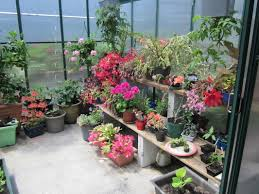 winter gardenz greenhouse news greenhouses nz winter gardenz