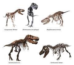 tyrannosauridae wikipedia