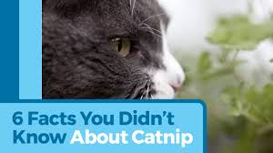 why do cats eat grass petmd