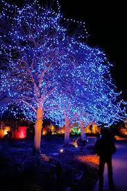 125 best beautiful trees with lights images on