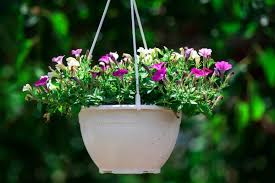 Vertical Garden For Balcony - gardening without a garden 5 ideas for balcony gardens blog