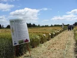 chambre d agriculture allier céréales une cagne qui porte les traces d une météorologie