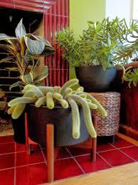 danger garden planting up my case study ceramic planter from