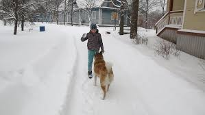 Dog In The Backyard by Boy Playing With Dog In The Backyard In Snow In Winter English