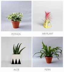 Best Low Light Indoor Plants by Bathroom Best Bathroom Plants Bathroom Plants Low Light