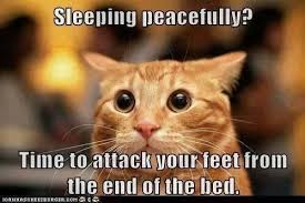 Cat Facts Meme - cat fact 88 oh noes not the toes title shamelessly stolen