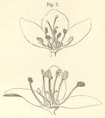 darwin c r 1877 the different forms of flowers on plants of