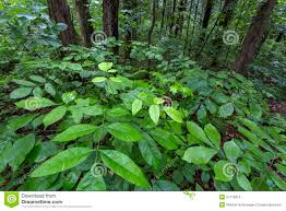 Kentucky vegetaion images Green plants on forest floor kentucky stock photo image 54778319 jpg