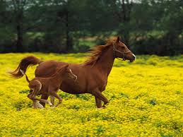 wallpapers horses free 81