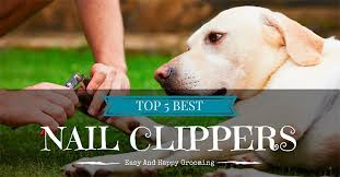 best dog nail clippers top 10 easy and happy grooming