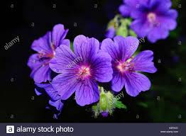 flower delivery near me flowers near me flower delivery stock photo 122661169 alamy