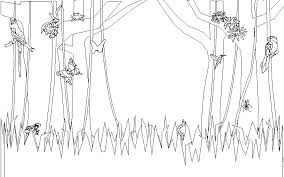 rainforest coloring pages ngbasic com
