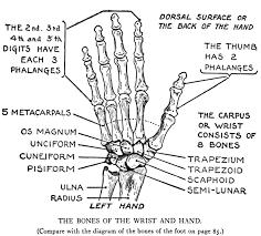 diagram of back leg car fuse box and wiring diagram images