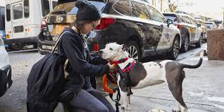 nissan rogue for dogs dogs will love these 7 vehicles