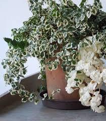 plants that need low light low light indoor plants best 25 low light plants ideas on plants