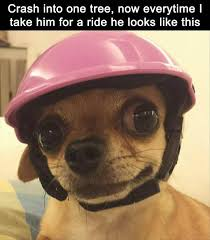 Funny Chihuahua Memes - 22 funny animal memes and pictures of the day cute daily lol pics