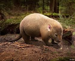 913 mammalia images prehistoric animals