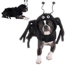 Dog Costume Halloween 25 Dog Spider Costume Ideas Spider Dog