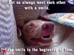 Dog Smiling Meme - italian greyhound memes part 1 romp italian greyhound rescue