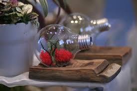 denver flower delivery light bulb terrarium tiny plants live inside in denver co