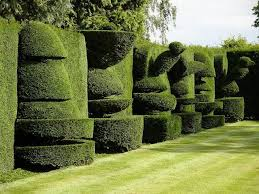 Yew Topiary - 29 best yew topiary images on pinterest topiaries topiary