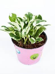 Best Plant For Office Desk Desk Plants For Office Desk As Per Vastu Indoor