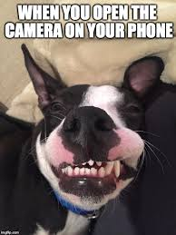 Dog Phone Meme - dog phone meme 28 images yes this is dog know your meme when