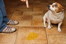 how to get rid of urine smell urine