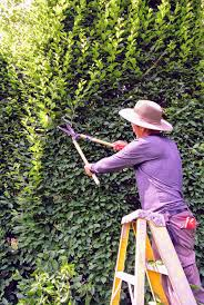 planting a native hedge trimming the hornbeam hedges the martha stewart blog