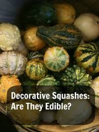 decorative squashes are they edible prepares