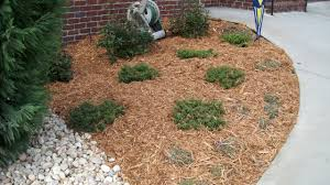 10 types of garden mulch choose the right one for your landscape